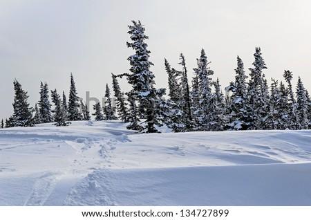 Ski resort Sheregesh, Green mountain, Mountain Shoria, Kemerovo region, Russia.