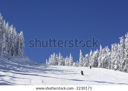 ski slope on pine covered mountain side