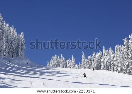 ski slope on pine covered mountain side - stock photo