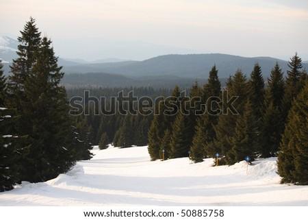 Ski slope through a forest - stock photo