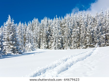 Ski trace on snow surface and winter fir forest behind. - stock photo