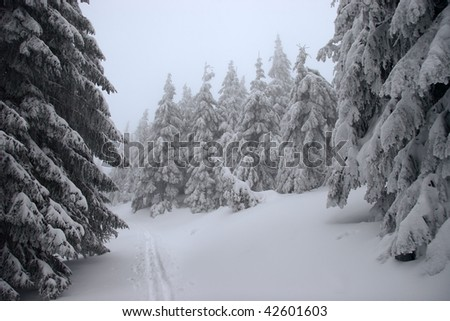 Ski track in a winter forest - stock photo