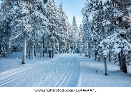 ski track in forest - stock photo