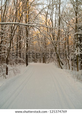 Ski tracks through the winter forest. Clear sunny day in good weather.  The route for cross-country skis. Winter sport - stock photo