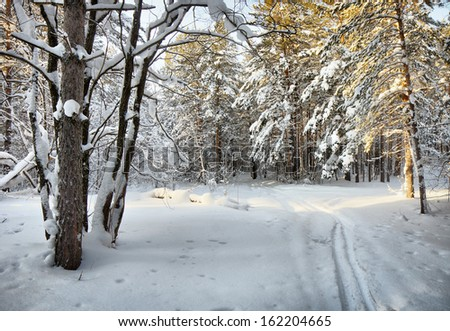 Ski trail in the winter cold woods