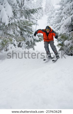 Skier on the slope with coniferous forest - stock photo
