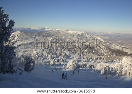Skiers  among snow-encumbered pines ski into Nevada desert at Lake Tahoe. - stock photo
