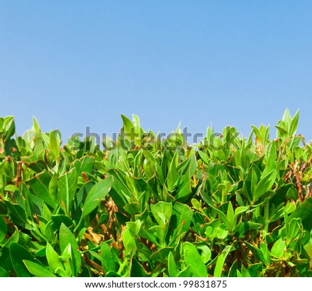 Skies Above Leaves Below - stock photo