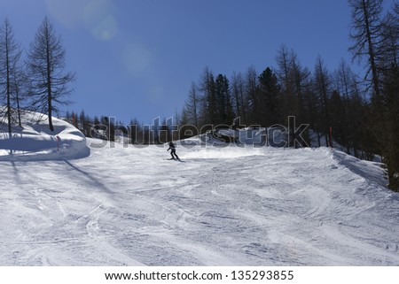 skiing among trees, San Pellegrino pass; skier in distance descends on snowy slope among bare trees, shot in back-light under deep blue sky - stock photo