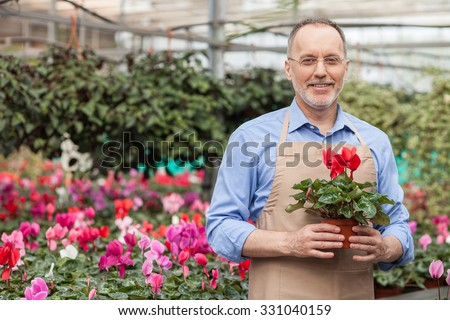 Skillful senior gardener is doing his work at greenhouse. He is standing and smiling. The man is holding plant and looking forward happily. Copy space in left side - stock photo