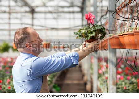 Skillful senior gardener is standing at greenhouse. He is holding flowerpot and looking at it with admiration - stock photo