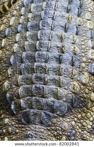 Skin crocodile - stock photo