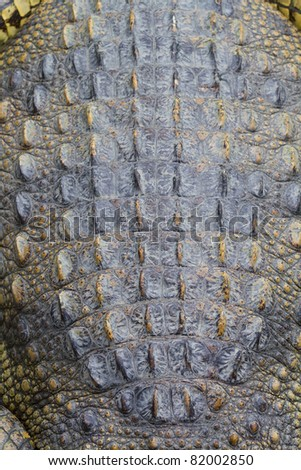 Skin crocodile - stock photo