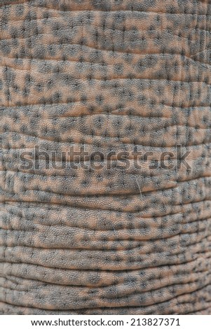 skin of elephant in the zoo at Thailand, texture skin elephant - stock photo