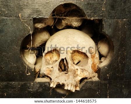 skull 3 - stock photo