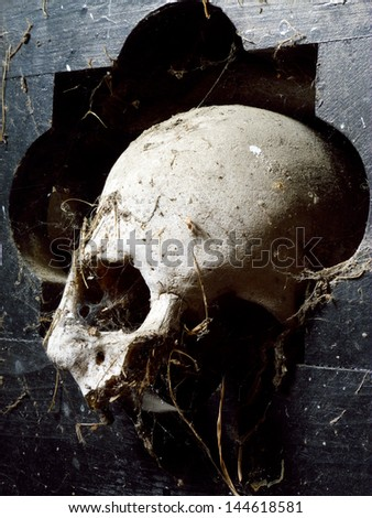skull 4 - stock photo