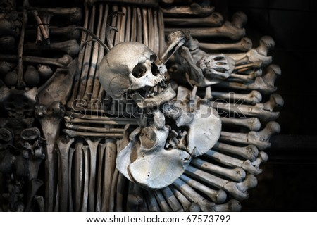 skull and bones - stock photo