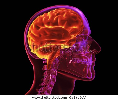 Skull and Brain, XRay - stock photo