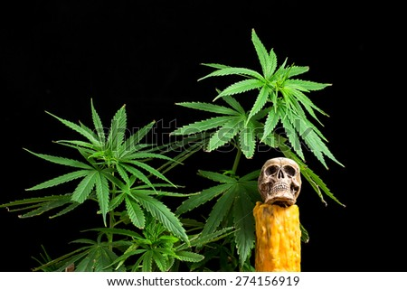 Skull and Green Cannabis Leaf on Black Background - stock photo