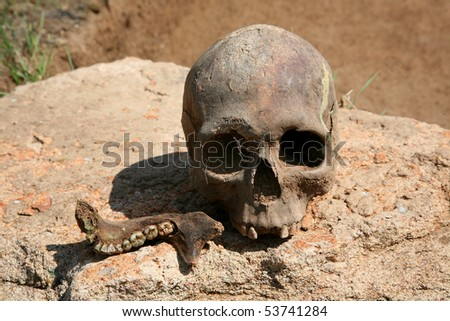 skull and jaw on a rock - stock photo