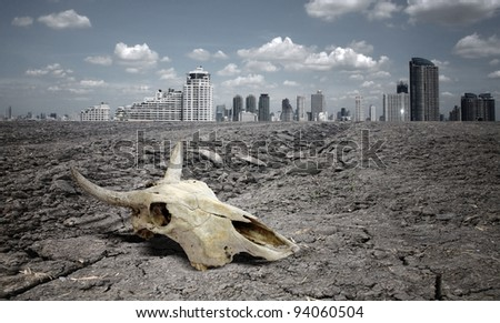 skull animal on dry land. - stock photo