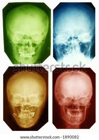 skull collection colorad - stock photo