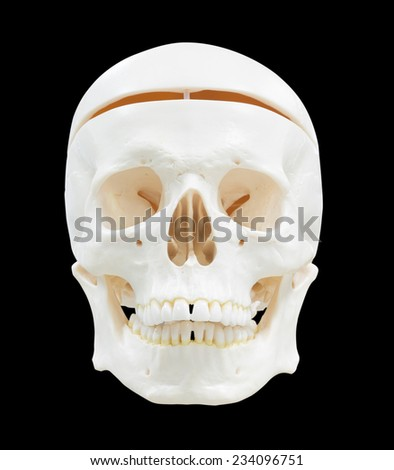 skull image isolated with clipping path - stock photo