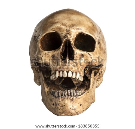 skull model in open the mouth pose isolated on white background - stock photo