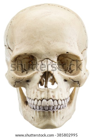 Skull model isolated on a white background. File contains clipping paths. - stock photo