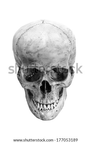 Skull model on isolated white background - stock photo