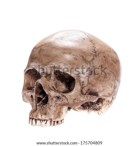 Skull model without jaw bone on isolated white background - stock photo