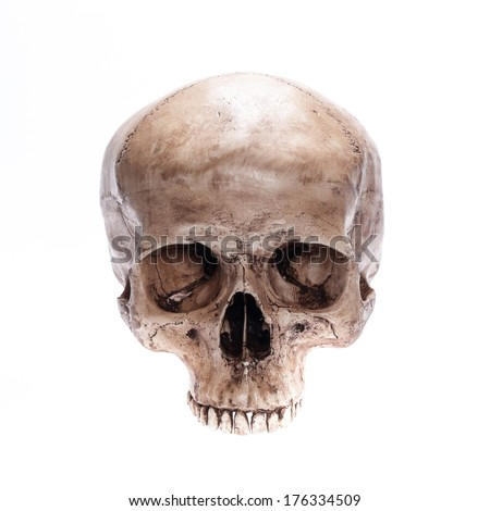 Skull model without jaw bone on isolated white background - stock photo