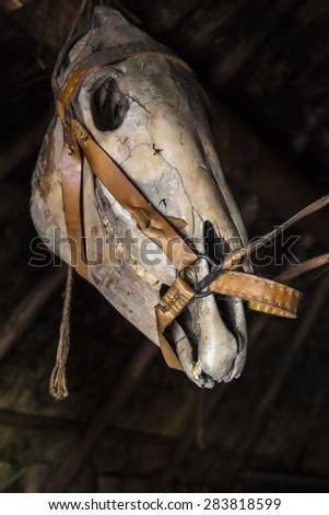Skull of a horse on a dark background old barn - stock photo