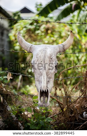 skull of cattle - stock photo