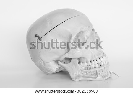 skull of human with old style - stock photo