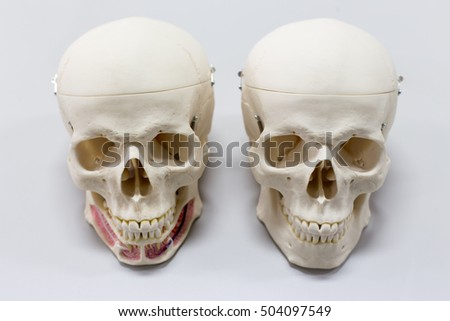 Skull on gray background in laboratory