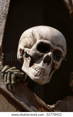 Skull on the black background - stock photo