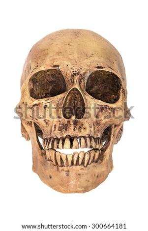 Skull on white background  - stock photo