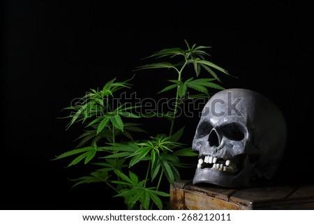 Skull Smoking Cannabis Still Life - stock photo