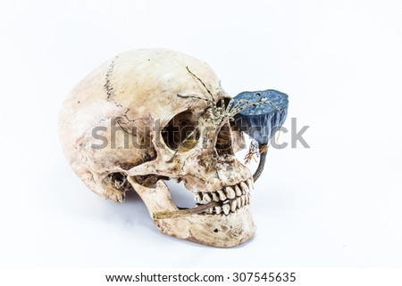 skull with spider and dry lotus seed - stock photo