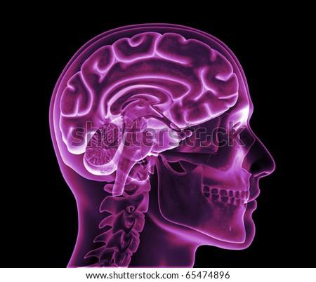 Skull XRay, Brain Hemisphere - stock photo