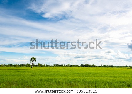 Sky and fields in the farming season - stock photo