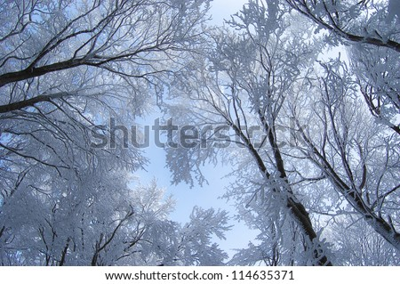 sky and frozen trees in winter forest - stock photo