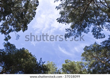 sky and pines - stock photo
