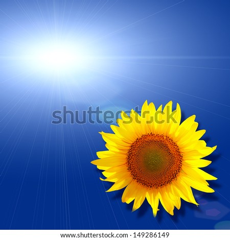 sky blue background with sun sunflower