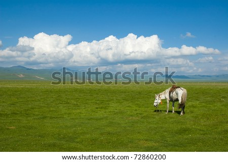sky,cloud,plain and white horse at gansu qinghai-tibet plateau china