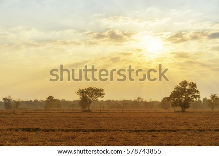 sky, cloud, rising sun, cornfield, abstract, background