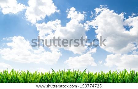 Sky grass background. - stock photo