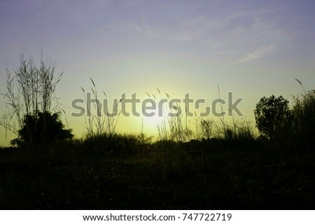 sky grass is very beautiful sunset