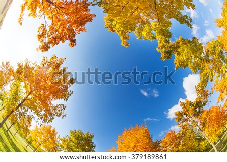 Sky surrounded like frame by autumn trees with yellow and orange maple foliage on sunny October day - stock photo